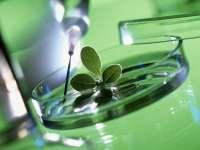 Энциклопедия лекарственных трав и растений